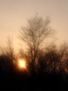 птица, закат, солнце