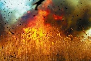 На нынешней жатве уже горели 6 пшеничных полей